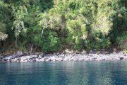 Isla Colcuma - Lago Ranco